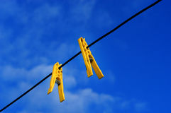 Springs. On a wire Stock Photography