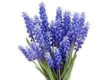 Springs flowers Stock Image