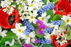 Free Springs Flowers Colors Stock Photos - 16453123