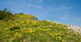 Springs flowers  in the Slovak mountains Stock Photo