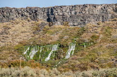 Springs Flowing from a Basalt Bluff Stock Images
