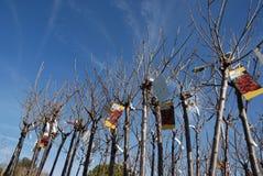 springs ogrodowe drzewa obraz stock