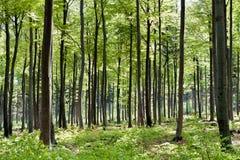 SpringSeasonForest Stock Image