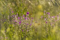 SpringSummer field with Wildflowers in sunset . Bokeh. Backlight natural background.Conceptual background for nature,season and ecology Stock Photography