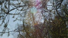 Springsungloed Mooie aardscène met bloeiende boom en zongloed Zonnige dag enkel Geregend Mooie boomgaard stock video