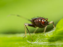 Springtail Bottom Stock Images