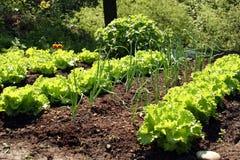 Springtame Gemüse Stockbilder