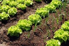Springtame vegetables Stock Image