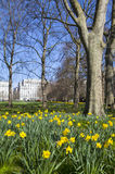 Springtim View of Green Park in London Stock Photography