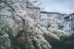 Springtime är kommande royaltyfria bilder