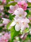 Springtime. Royalty Free Stock Photos