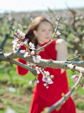 Springtime. Young woman in red among the blossoming peach trees Royalty Free Stock Photo