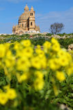 Springtime. View of big church with yellow blooms in the foreground Stock Images