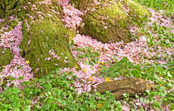 Springtime Royalty Free Stock Photography