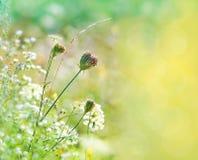 Springtime royalty free stock photos