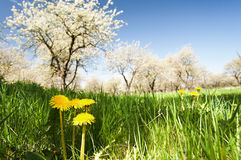 Springtime Arkivfoto