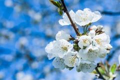 Free Springtime Royalty Free Stock Photo - 28426865
