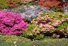 springtime Royaltyfria Bilder