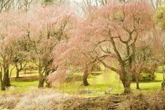 springtime Royaltyfri Foto
