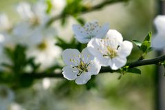 Springtime. Image of a spring flowering Royalty Free Stock Image