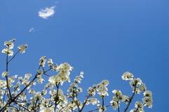 springtime Royaltyfri Bild