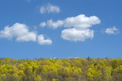 SPRINGTIME. Trees on hill in the spring against the blue sky with clouds Stock Images