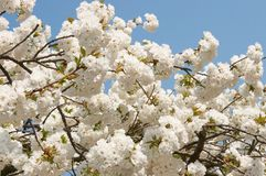 Springtime abundance Stock Image