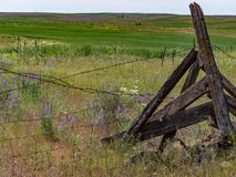Springtime along the old fenceline. Spring wildflowers dot the fenceline of a central Oregon ranch Stock Photos