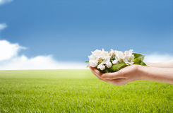 Springtime - Apple Blossom in Hands Stock Photos