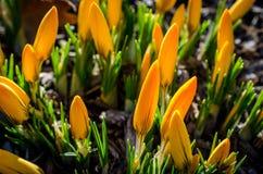 Springtime Approach Stock Photo