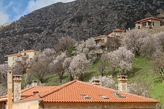 Springtime In Arachova, Greece. Blooming trees at the Greek mountain resort of Arachova Royalty Free Stock Photos