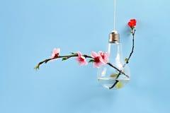 Springtime background. Gentle spring wedding flower decoration idea. Modern bulb vase with sakura flowers Royalty Free Stock Photos