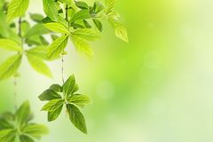 Springtime background with green leaves. Shallow dof Stock Photos