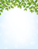 Springtime background with leaves border. Background for springtime, border of leaves on top, large copy space Royalty Free Stock Photo