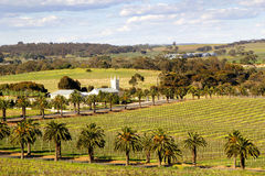 Springtime in the Barossa Valley Royalty Free Stock Photo