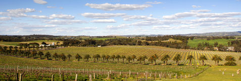 Springtime in the Barossa Valley Royalty Free Stock Photos