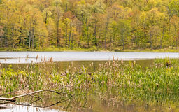Springtime Barrett Pond Beebe Hill State Forest Royalty Free Stock Images