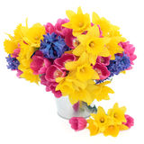 Springtime Beauty Royalty Free Stock Photo