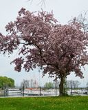 Springtime At Belmont Harbor Royalty Free Stock Images