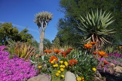 Springtime bloom in California at Taft Botanical Gardens, Ojai C Stock Photos