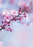 Springtime blooming tree background Royalty Free Stock Image