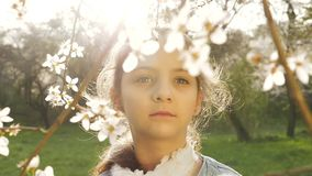 Springtime, Blossoming Tree stock video