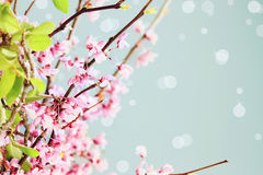 Springtime Blossoms Royalty Free Stock Photography