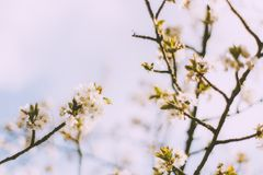Springtime blossoms royalty free stock image