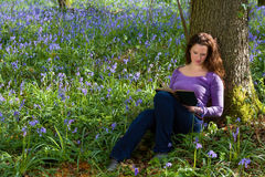 Springtime bluebells and a book Stock Image