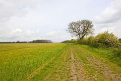 Springtime bridleway Royalty Free Stock Image