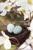Springtime bygga bo Royaltyfria Bilder