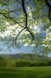 Springtime in Cades Cove of Great Smoky Mountains, Tennessee, USA. In early May, the early spring in Cades Cove of the Great Smoky Mountains, the scenery is Royalty Free Stock Photo