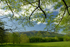 Springtime in Cades Cove of Great Smoky Mountains, Tennessee, USA. In May, the early spring in Cades Cove of the Great Smoky Mountains, the scenery is beautiful Royalty Free Stock Photography