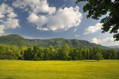 Springtime in Cades Cove of Great Smoky Mountains, Tennessee, USA. The spring and summer in Cades Cove of the Great Smoky Mountains shows scenery that is Royalty Free Stock Photography